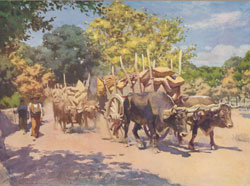 Ox Wagons on Road to Madrid
