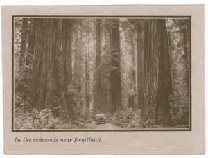 In the redwoods near Fruitland