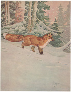 [Red Fox in Snow]