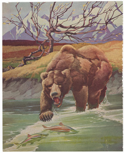 Grizzly bear fishing for salmon