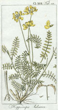 Hippocrepis Calearica