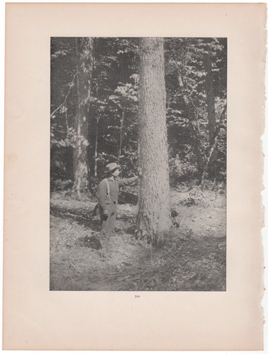 [logger leaning against tree]