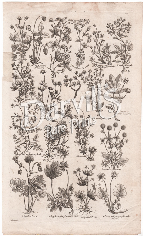 Dr  John Hill Botanical Prints From The British Herbal  1756