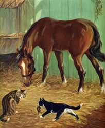 The horse and cats are good friends