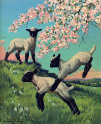 The lambs jump and play