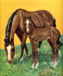 The little colt stays near his mother