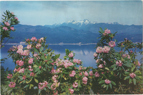 Rhododendrons and Hood Canal