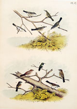 Vireos, Hummingbird, Finch, Flycatchers