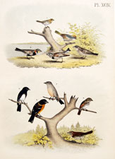 Sparrow, finch, bunting, grosbeak